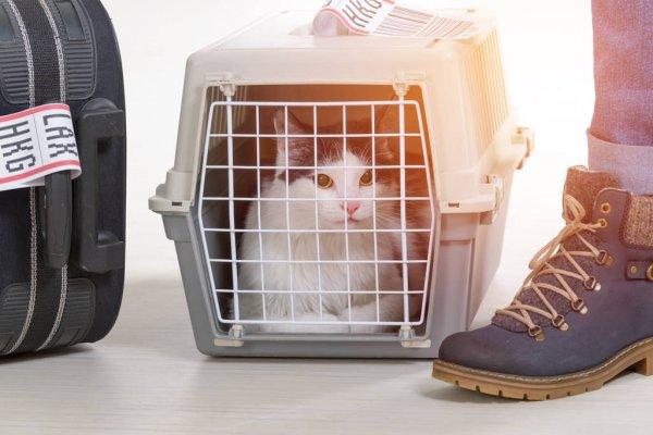 Можно ли перевозить животных в общественном транспорте