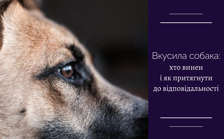 Вкусила собака: хто винен і як притягнути до відповідальності